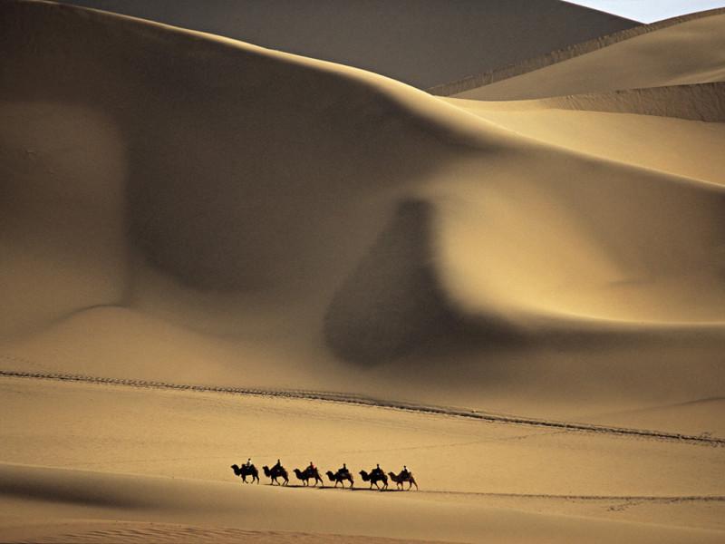 camel caravan crossing desert